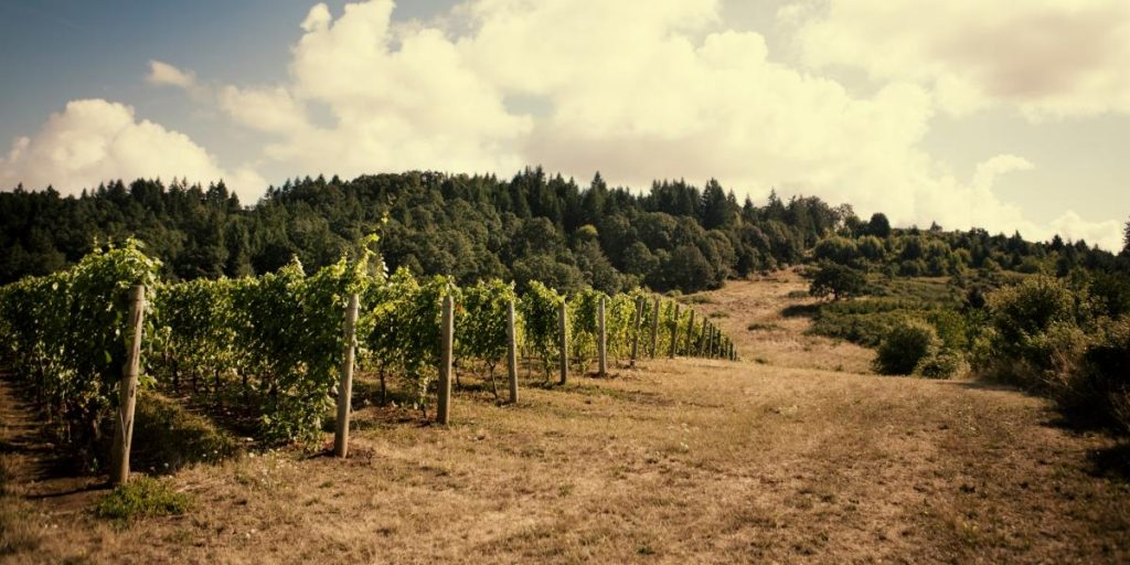 Oregon AVAs | Oregon Wine Regions | Rainstorm Wines