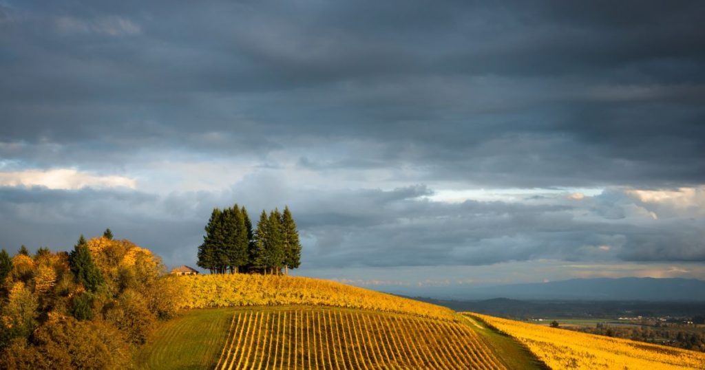 American Viticultural Area | Willamette Valley Pinot Noir | Rainstorm Wines