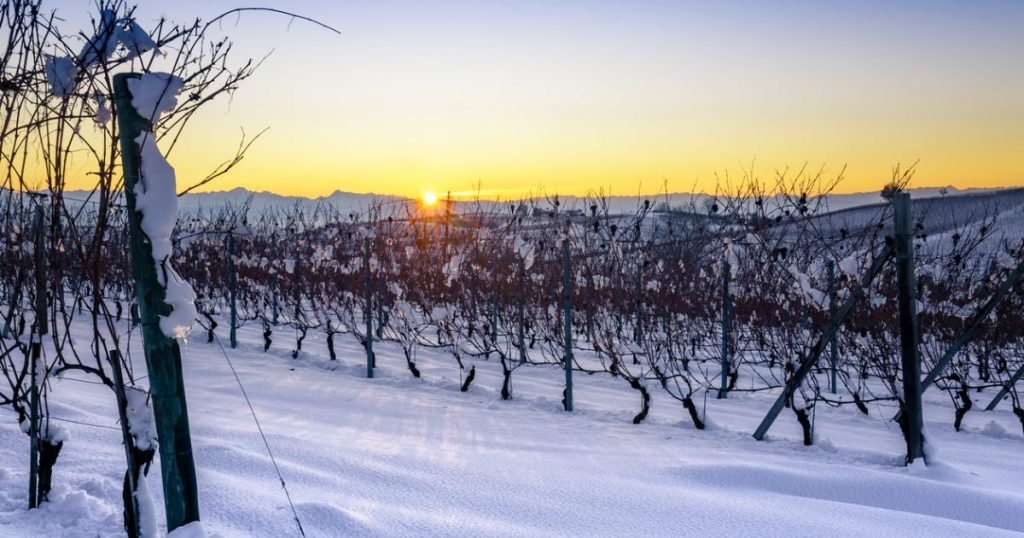 Vineyards in Winter | Willamette Valley Wine Cellar Season | Rainstorm Wines